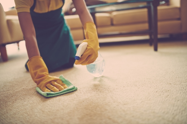 Best Carpet Stains and Spot Removers