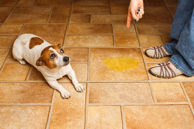 How to Clean Dog Vomit from Carpet